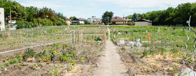 selbsternte-biohof-radl-satzingerweg-3-640x250-crop-49-51.jpg