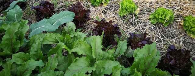 selbsternte-biohof-radl-selbsternte-radl-img-20180615-191145-640x250-crop-48-79.jpg